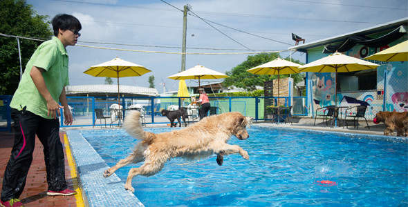 Dog Swimming Pools - Petworld Resort