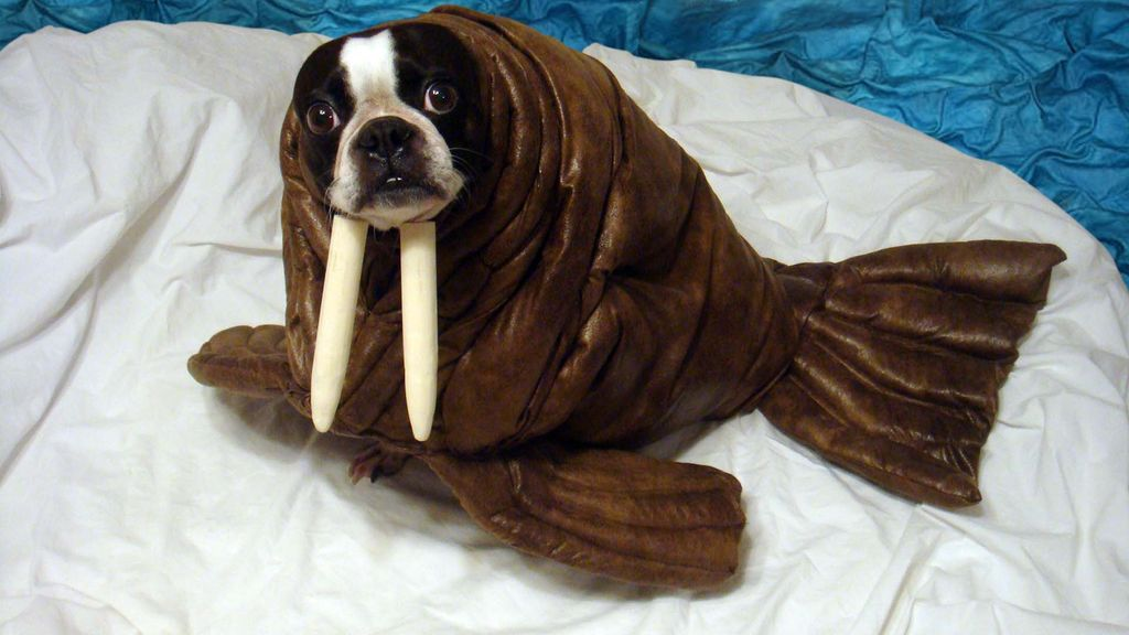 13. Wacky Walrus & 22 Dog Costumes that are Perfect for Halloween