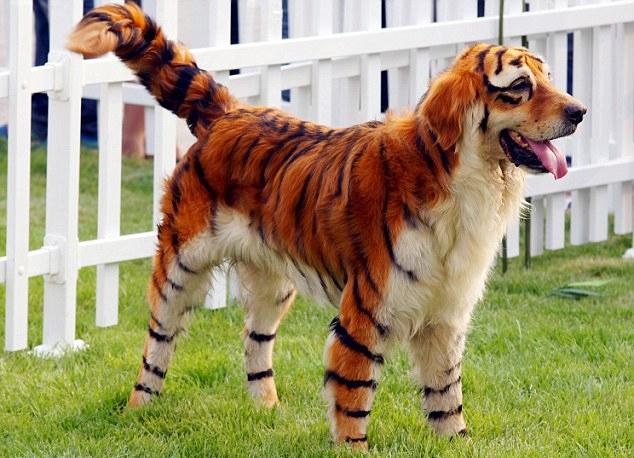 Photo Source: Dogtime.com