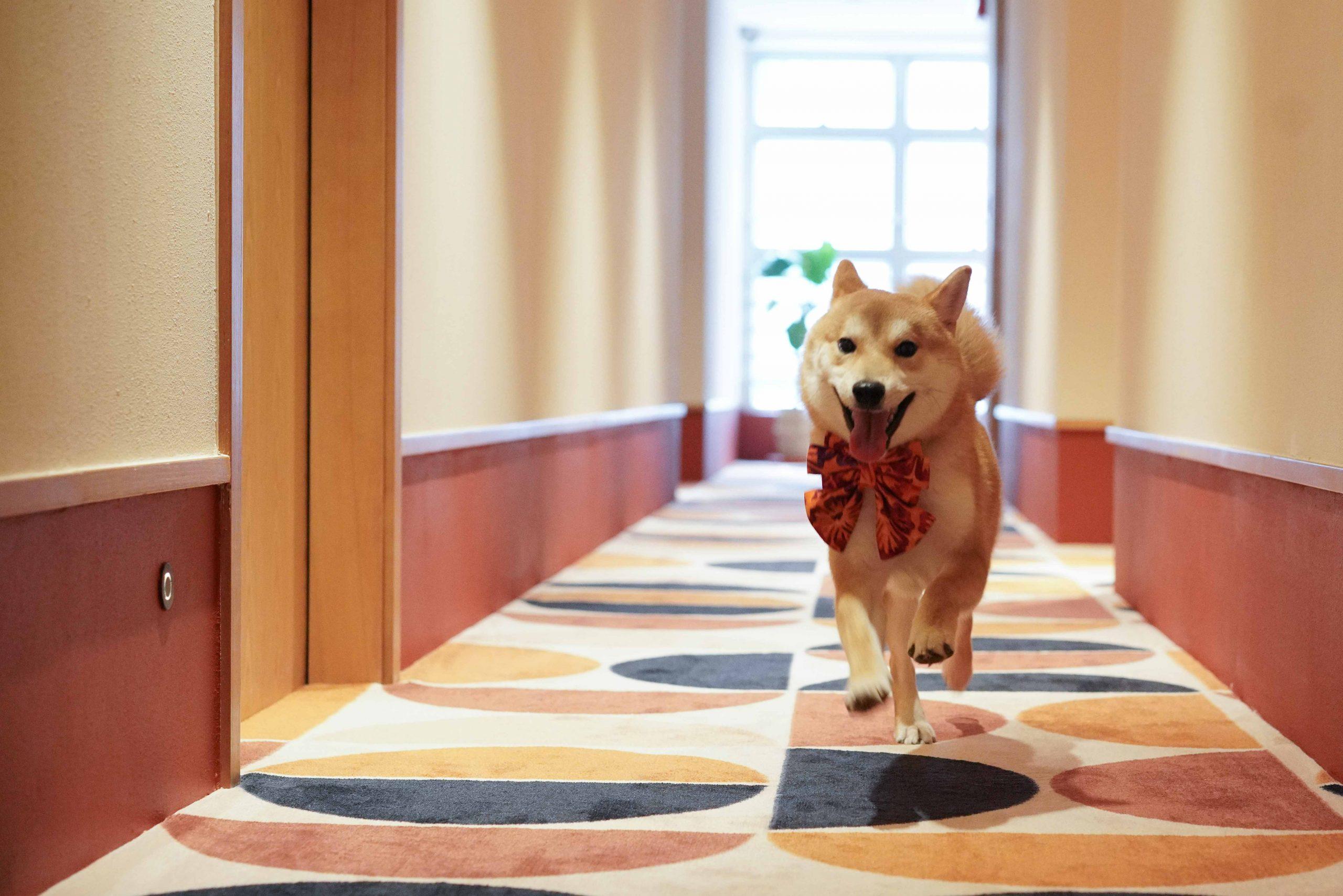 服務式住宅-翡格酒店-the-figo-養寵物